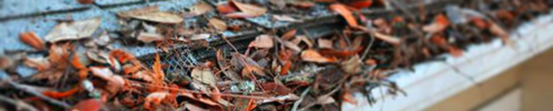 Photo of a gutter filled with leaves